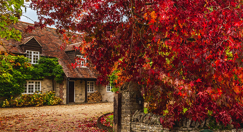 Fall Foliage: Best Trees and Shrubs for Red Fall Color