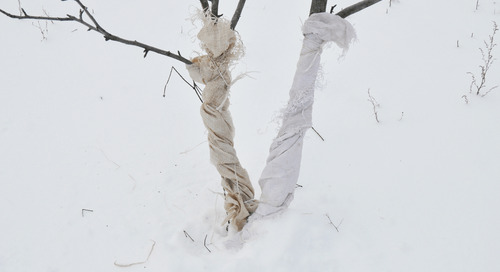 How To Protect Newly Planted Trees in Winter