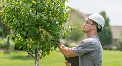 Spring Ahead: Schedule a Tree Inspection