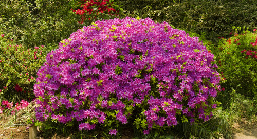 How to Use Dwarf Evergreens for Landscaping