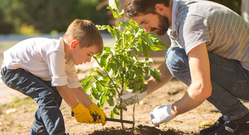 Tips and Tricks on How to Plant Trees in the Spring