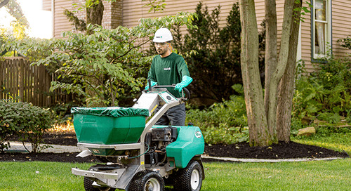 Lawn Aeration and Overseeding Aftercare