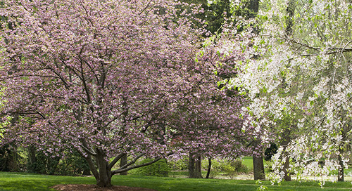 Why You Should Fertilize Flowering Trees?