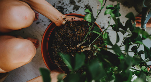 How to Refresh Potted Plants by Changing Soil