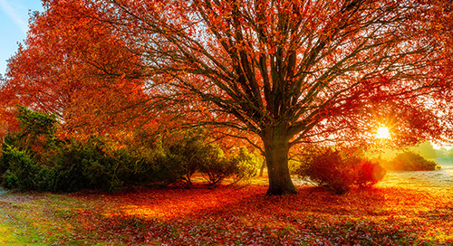 Best Oak Trees To Plant for Color