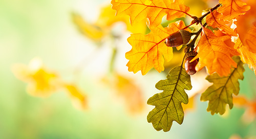 Tree Care Checklist: How to Keep Trees Healthy This Fall