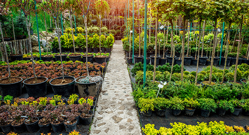 Guide on How to Choose A Tree to Plant: Planning & Selecting
