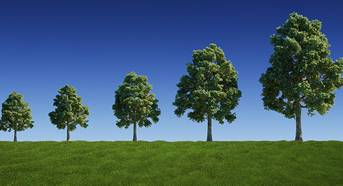 Tree Growth Rates 101: What You Should Know
