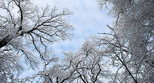 Winter Tree Care Checklist: Preparing Trees for Spring in 3 Steps