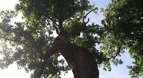 What Is Tree Topping and Why Topping Is Harmful to Trees