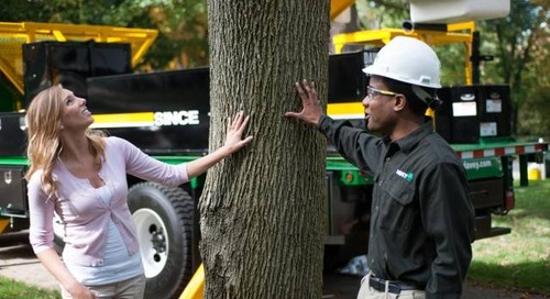 Top 5 Most Common Tree Problems and Solutions