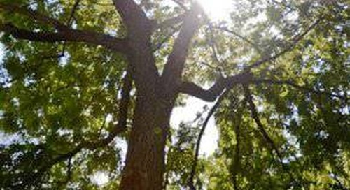 Summer Tree Care Checklist: 3 Steps to Tree Safety this Season