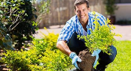 Celebrate Arbor Day by Planting Nature's Sunscreen