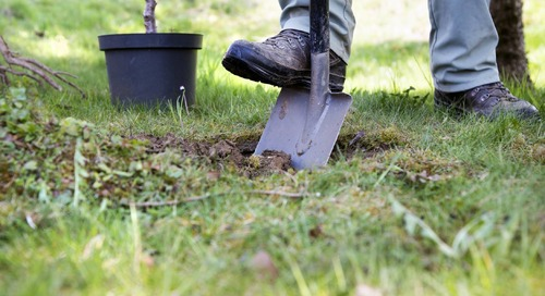 How to Fix a Tree Planted Too Deep