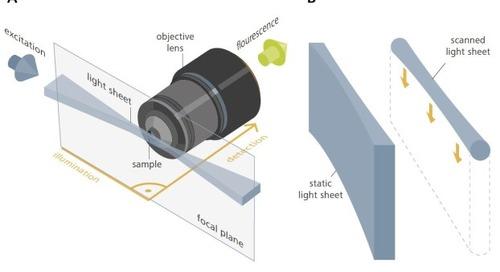 Light Sheet Microscopy with ZEISS Lightsheet Z.1