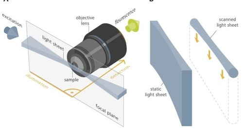 Light Sheet Microscopy with ZEISS Lightsheet Z.1