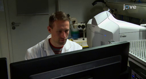 New Video Publications Detailing Zebrafish Developmental Imaging with ZEISS Microscopes