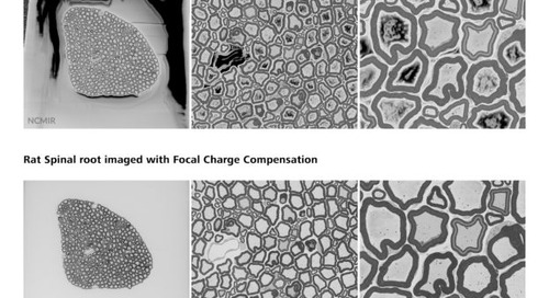 New Focal Charge Compensation mode improves image quality of ZEISS field emission scanning electron microscopes