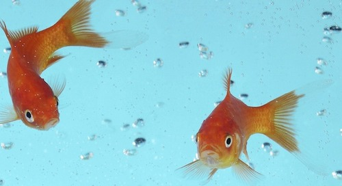 How to Market to Goldfish: What Decreasing Attention Spans Mean for Marketers [Infographic]