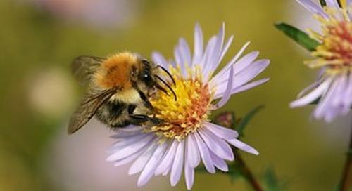The Honeybee Population