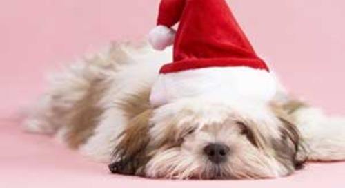 Lessons for 2014: What Was Missing in Your 2013 Holiday Marketing Strategy?