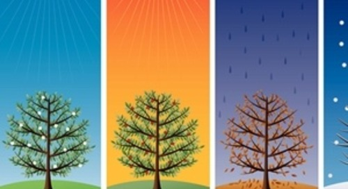 Imitating Mother Nature: The Four Seasons of Business Growth