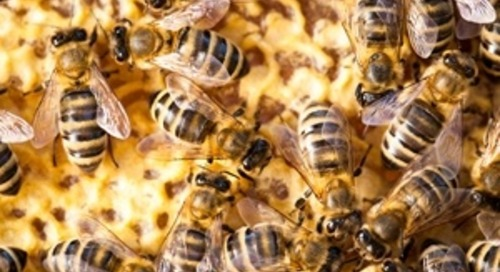 Three Reasons Why Swarm Intelligence Trumps Polls and Focus Groups
