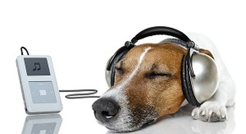 Does Your Company Need Audio Branding?