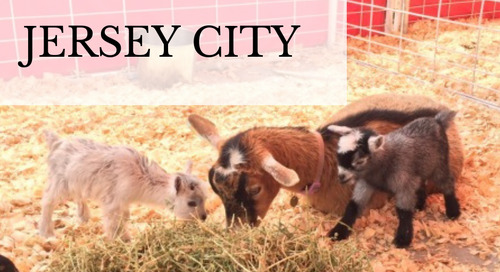 Petting Zoos and Pony Rides Near Jersey City