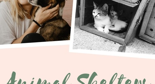 Animal Shelters in and Around Jersey City