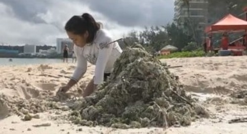 Algae threatens island's tourism capital