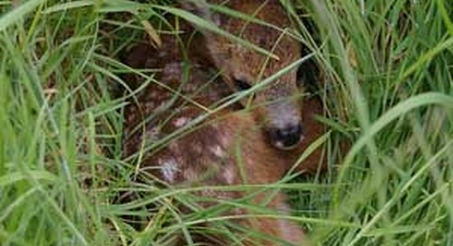 Public urged to leave wildlife babies alone