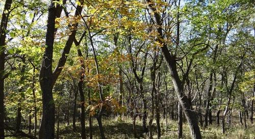 Foraging for Fall Fungi