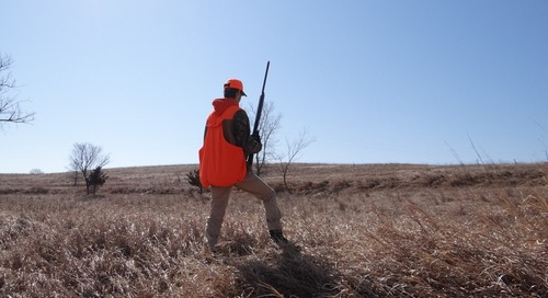 Hunters: Do You Know the Pheasant's Itinerary?