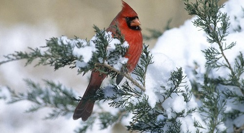 Great Backyard Bird Count – Nebraska Outdoors Radio