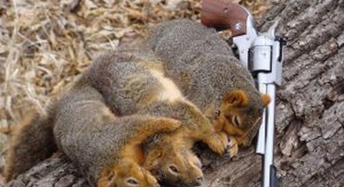 Summer Squirrels