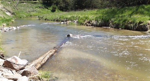 Cold Water Stream Plan