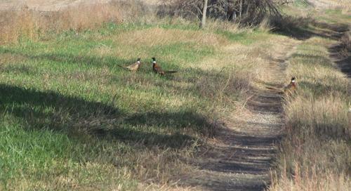 Tracking Pheasant Hunters
