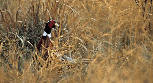Bird Season Brings Reminder for Safety