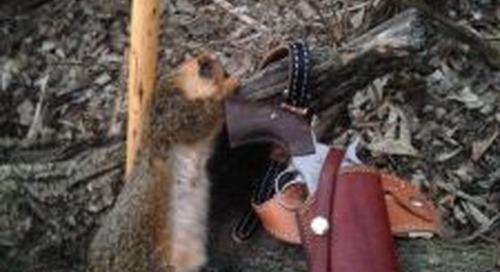Squirrel Season!