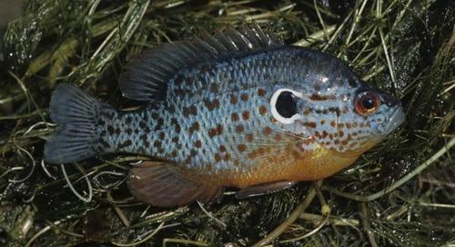 Micro-Fishing