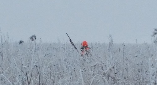 Late Season Roosters: Pinch, Post and Follow the Dog!