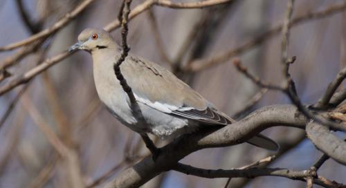 Top ten birding stories of 2016