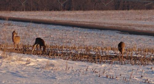 Late Season Deer Hunting Tips