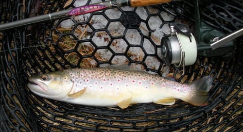 No Ice Required for this Winter Trout Fishing