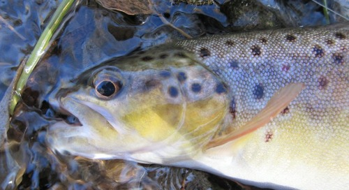 Crawford Fish Hatchery