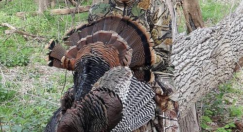 10 Reasons to Hunt Turkeys in Nebraska this Spring!