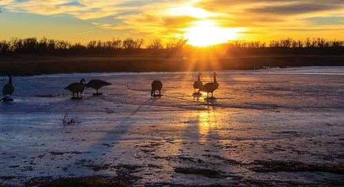 Clear Creek: A Special Hunting Area for Waterfowlers