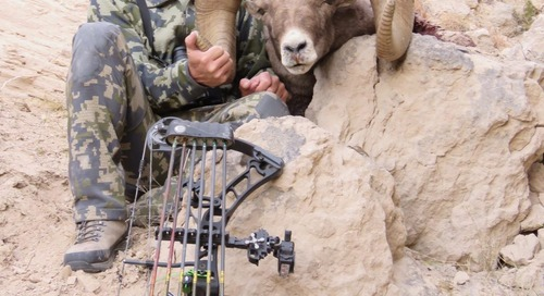 Archery hunter's bighorn sheep likely a Nebraska record