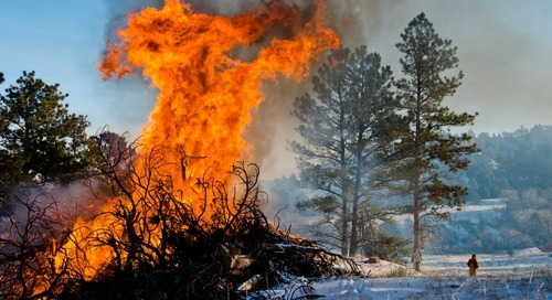 Game and Parks to burn slash piles at WMAs